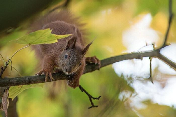 denoise-squirrel
