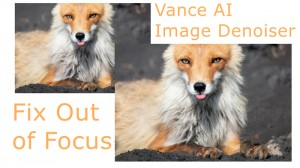 Tips and Tricks: How to Fix an Out-of-Focus Picture